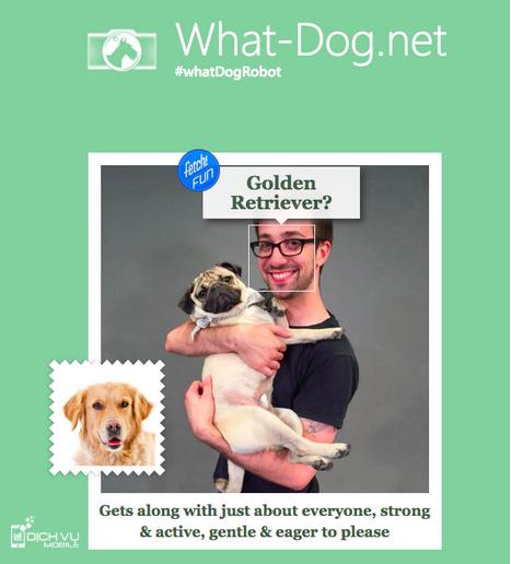 Hướng dẫn sử dụng ứng dụng bạn là giống chó nào của Microsoft