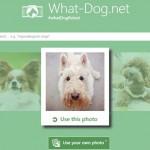 Ứng dụng bạn là giống chó nào của Microsoft – What-dog.net